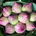 Pak Khlong Talat Flower Market Lotus Blossom Buds Bangkok Thailand.jpg